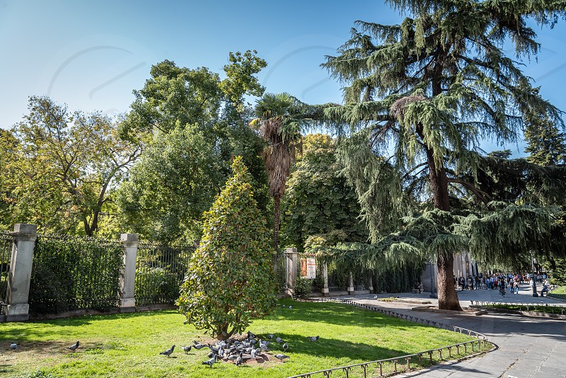 Entrance to Royal Botanical Garden of Madrid it is located near to Prado Museum and was designed by the architects Sabatini and Juan de Villanueva photo