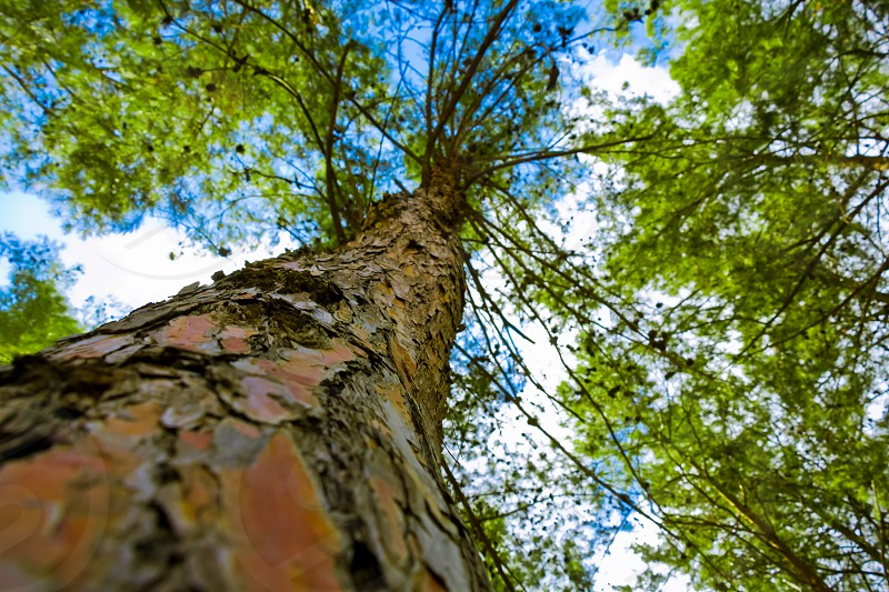 Tree from below. Tree with a narrow depth of field. Vivid color. photo