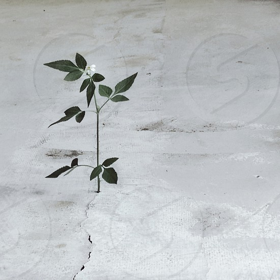 green weed with white flower growing out of cement photo