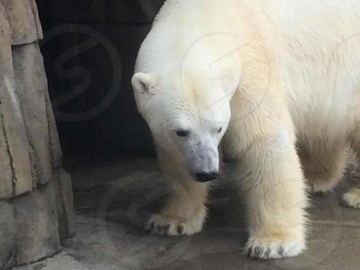 white polar bear photo