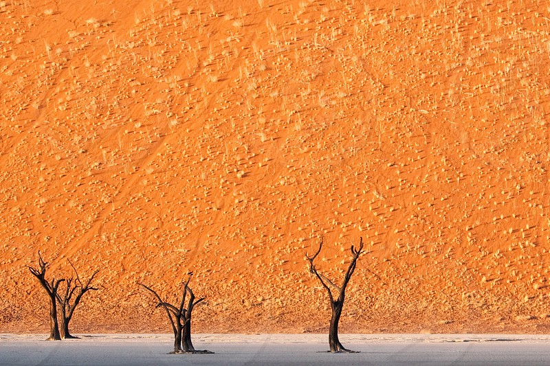 Sand dune and trees photo