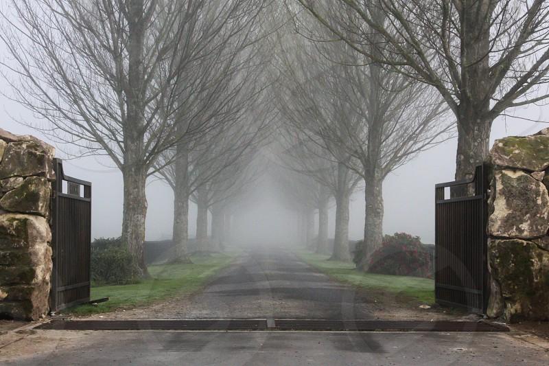 Foggy Driveway Matamata New Zealand photo