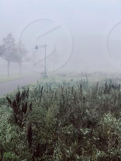 Autumn fall season fog foggy misty mist grass road nature photo