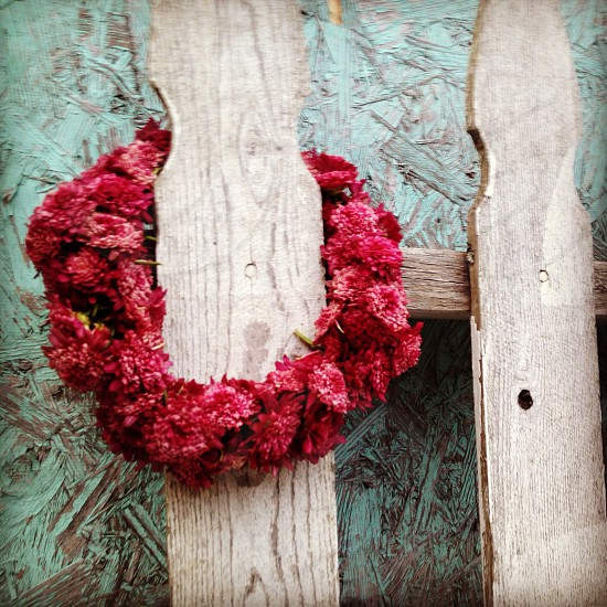 red round shaped flower on brown wooden fence photo