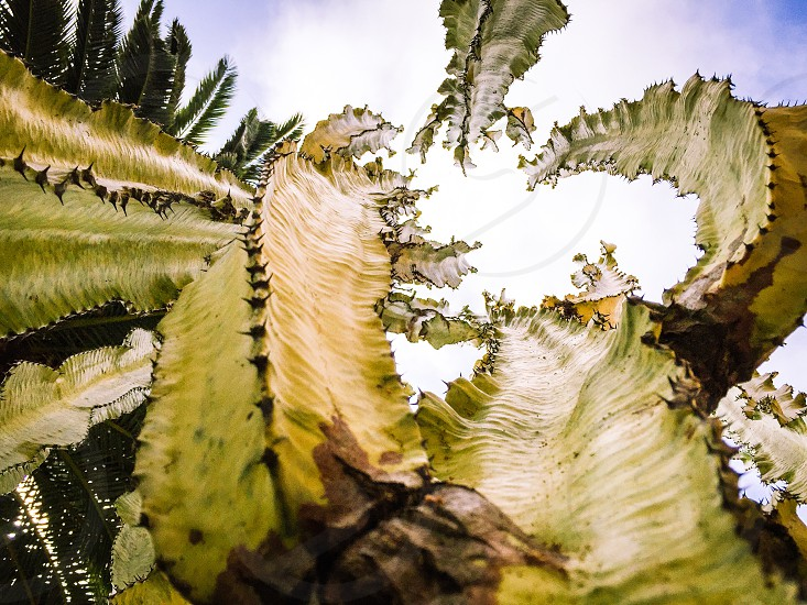 green and white cactus plant photo