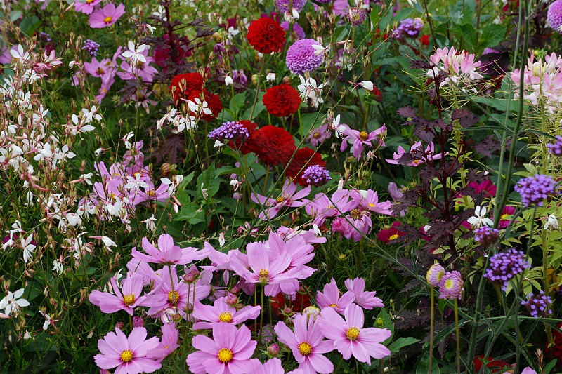 spring flowers color red pink purple white outdoors garden photo