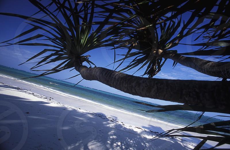 AFRICA TANZANIA ZANZIBAR EAST COAST INDIAN OCEAN BEACH photo