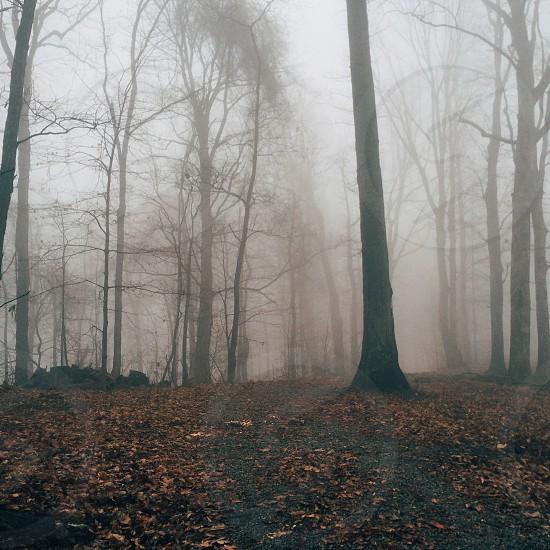 Foggy trees photo
