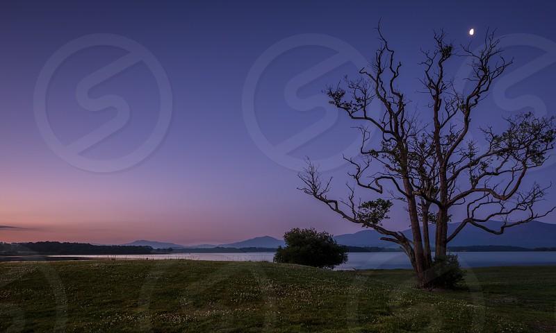 purple blu sky with tall dormint tree photo