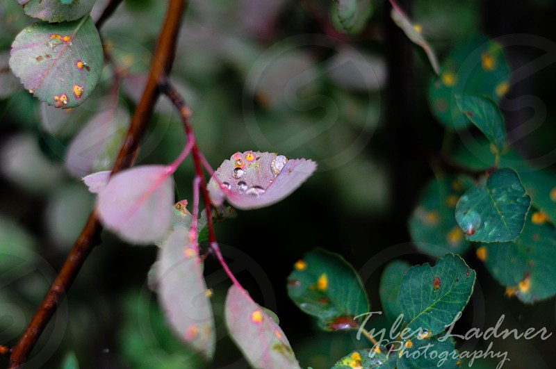 Water droplets take refuge on leaves during a light rain photo