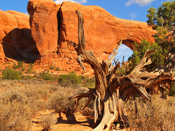 Arches national park Utah photo