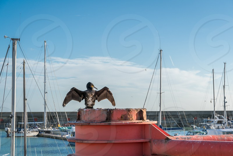 Cormorant spreading wings on a red structure in Brighton photo