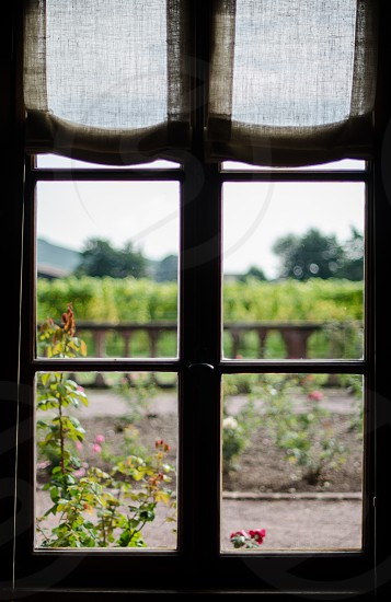 view of the garden from the window photo