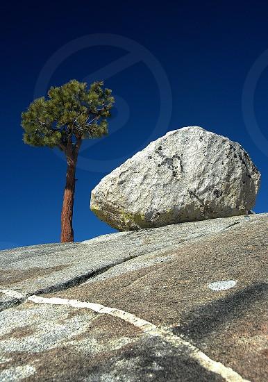 green tree beside rock  photo
