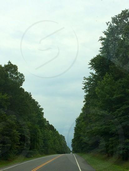 Trees along the way photo