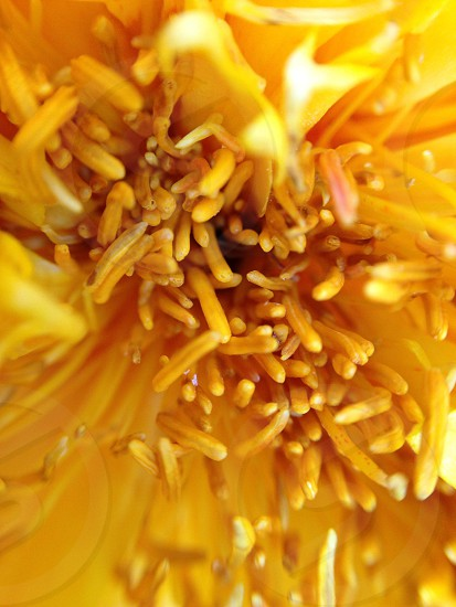 yellow flower macro photography photo