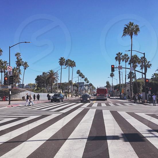Los Angeles Santa Monica USA Palm Trees Crossroads Junction Pedestrian Crossing photo