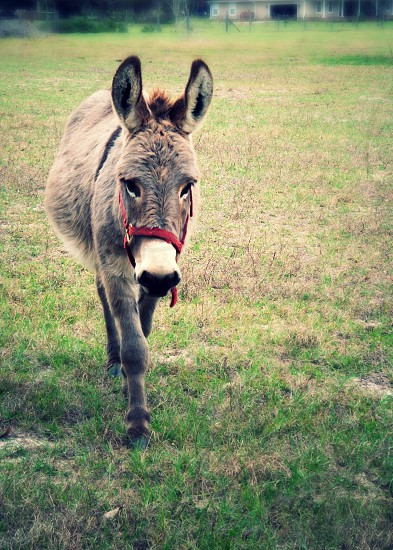 gray donkey on green grass photo