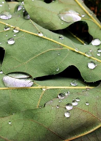 A leaf with rain drops  photo