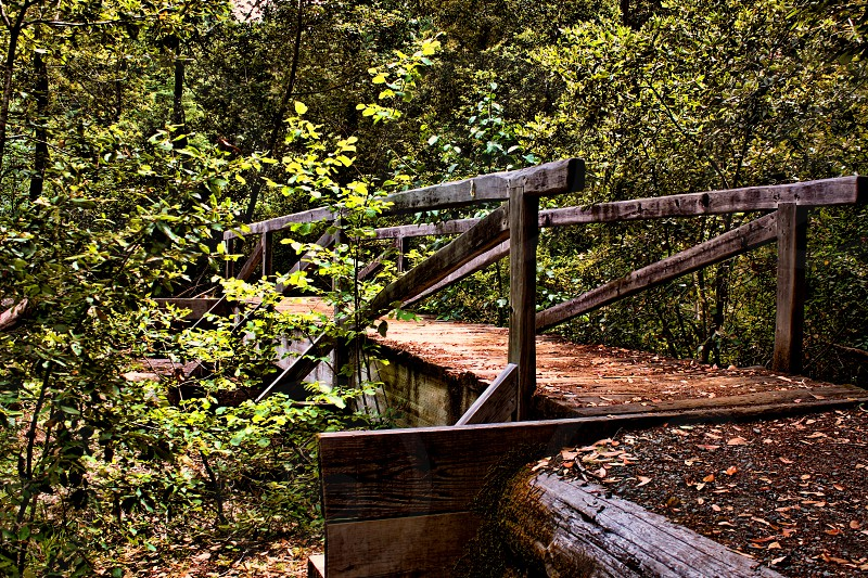 A rustic wooden bridge is partially hidden among tree branches deep in a forest. photo