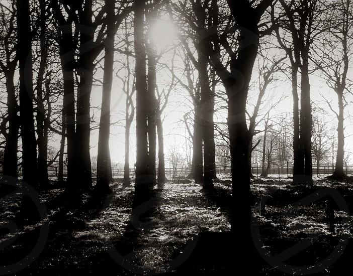 Dark Forest photo