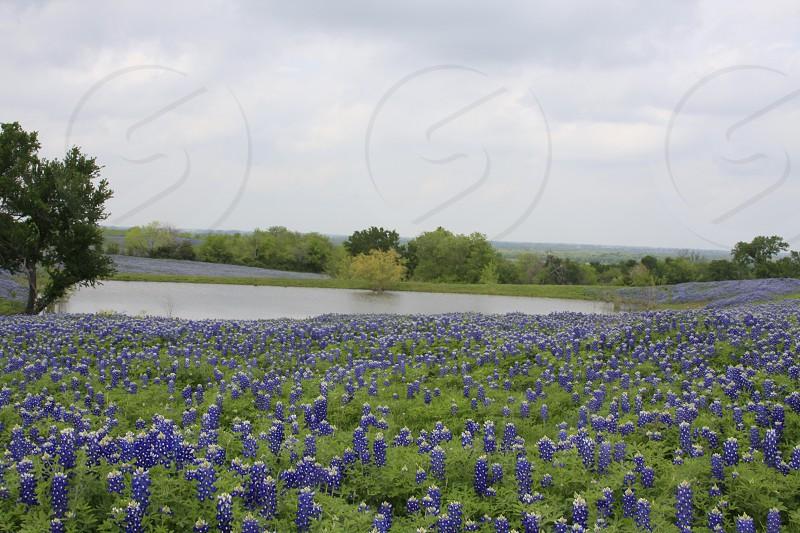 blue plant photo
