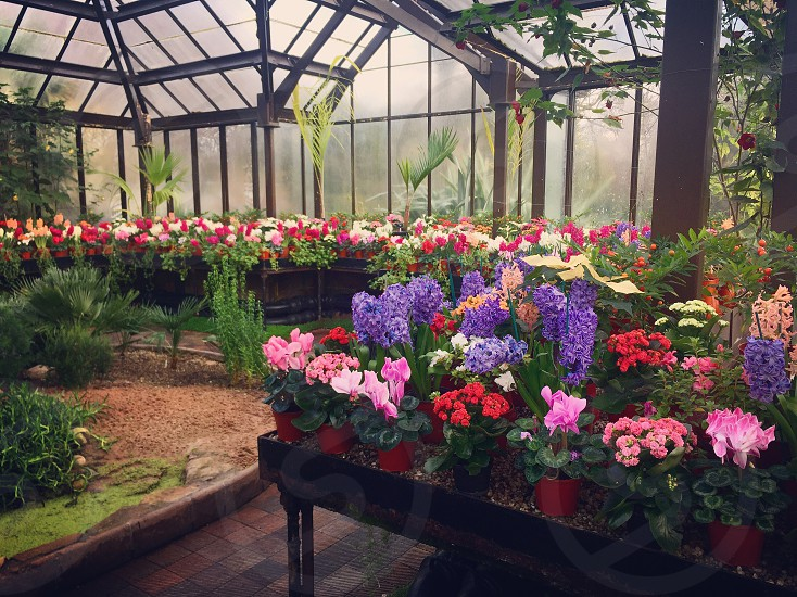 Gardenflowersspring photo
