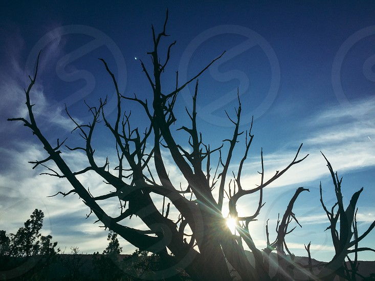 Deadwood // Palo Duro Canyon State Park Texas photo
