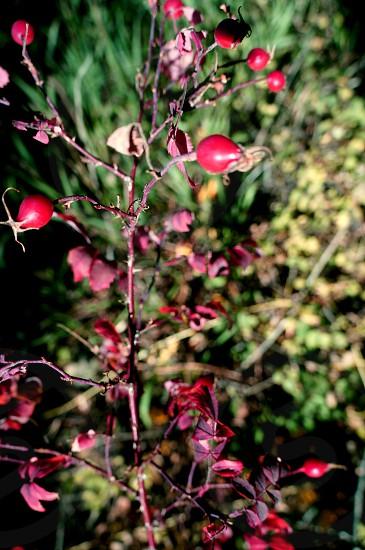 Colorado Rocky mountain wildflowers photo