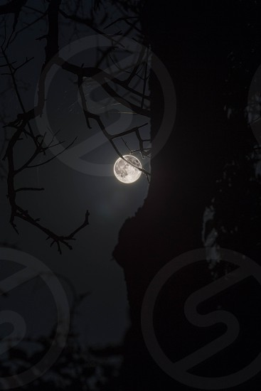 Supermoon - Bright moon on dark sky with tree in foreground photo