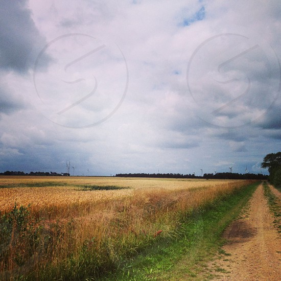 wheat field under cloudy sky at daytime photo