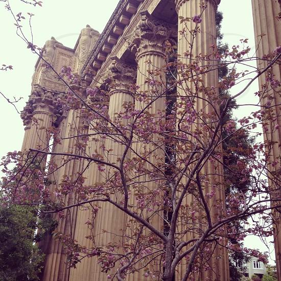 San Francisco palace of fine arts columns  photo