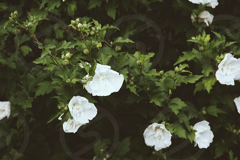 white flower and green leaves photo