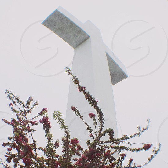 White Cross with climbing Bougainville  photo