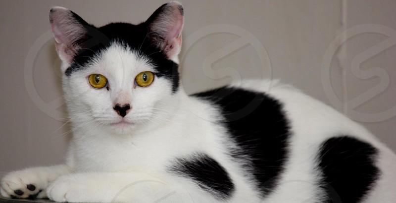 Heart nose cat photo
