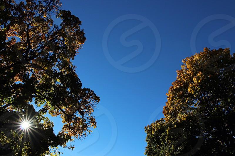 sun shining in a blue sky through a tree photo