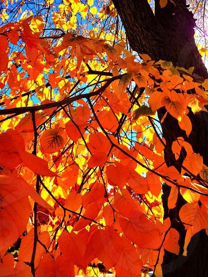 Fall autumn leaves tree seasons orange photo