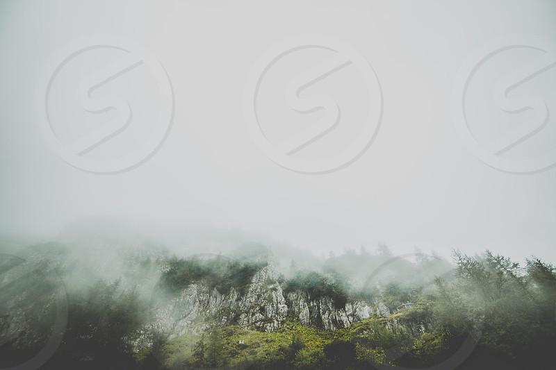 winter fog cliff trees moss pines photo