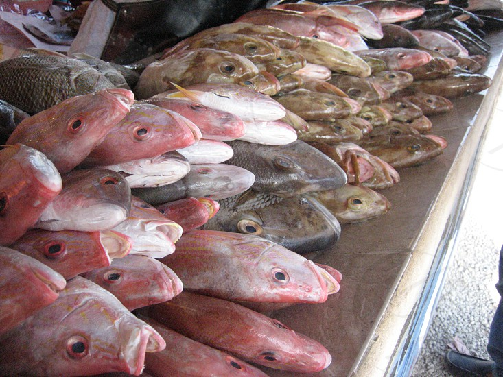 Fresh fish at Bacalar Mexico fishmongers. photo