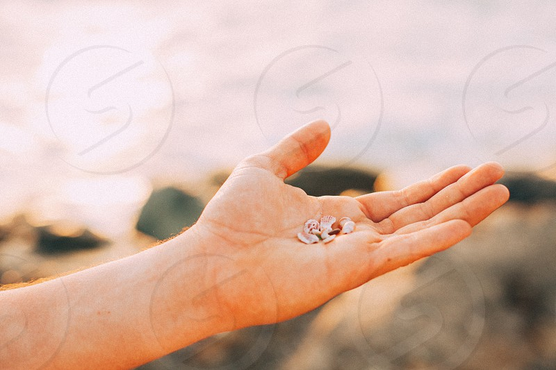 arm with palm up holding tiny pink and white seashells over rocky beach with water in background photo