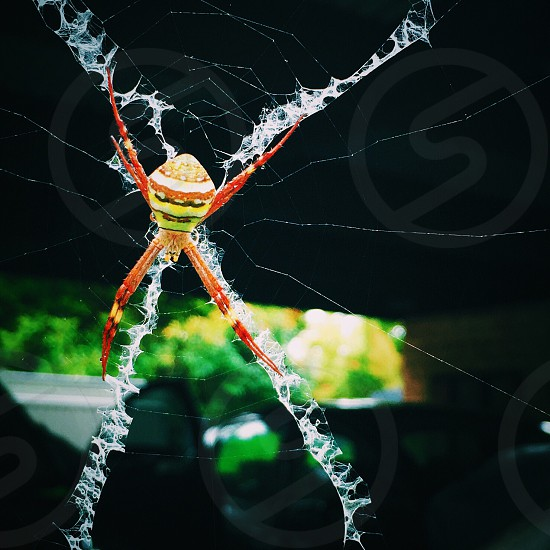 signature argiope on web selective focus photography photo