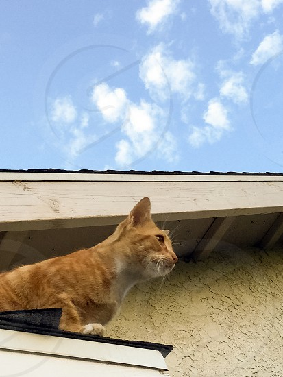Cat on a roof photo