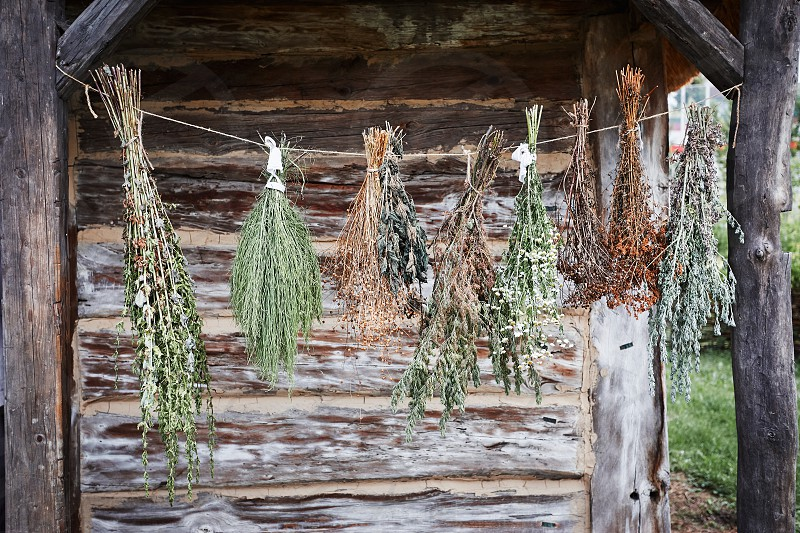 Some species of herbs are withering hanging on a linen string outdoors at front of old cottage. Healing by the natural organic treatment photo