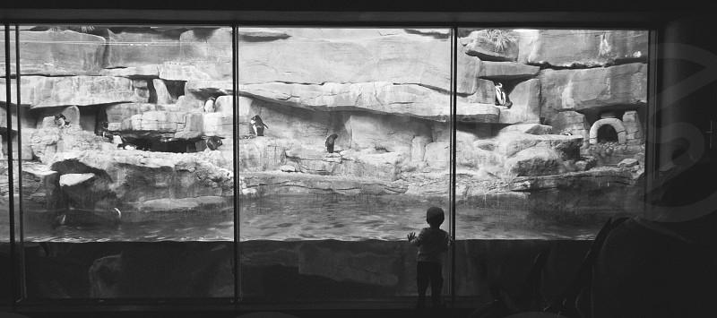 boy standing in front of animal aquarium photo