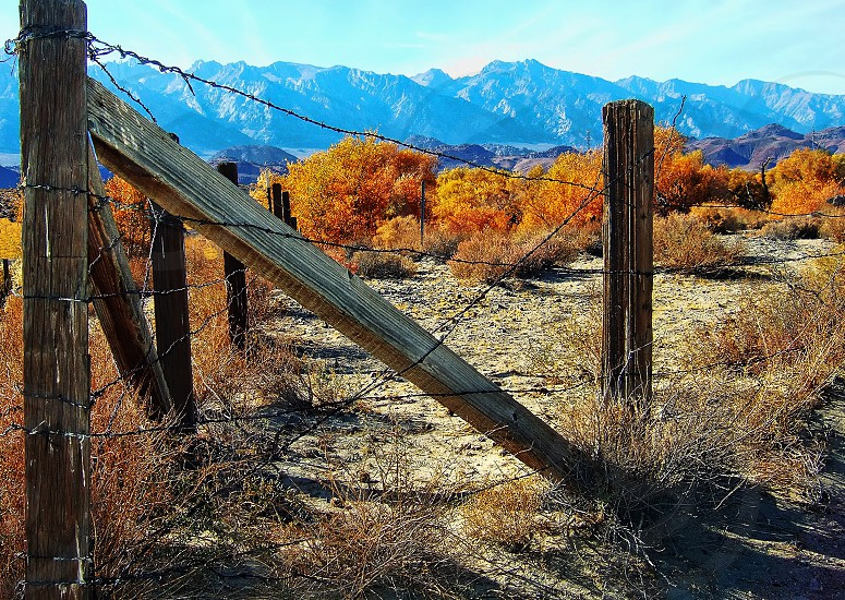 A rustic wooden fence surrounds a field of autumn foliage in the town of Keeler California.. near the Eastern Sierras photo