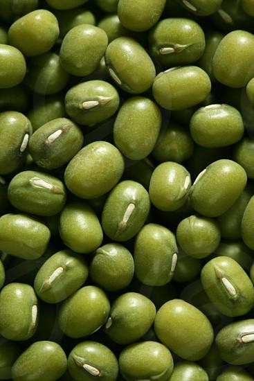 Green soya beans macro texture crop background detail photo