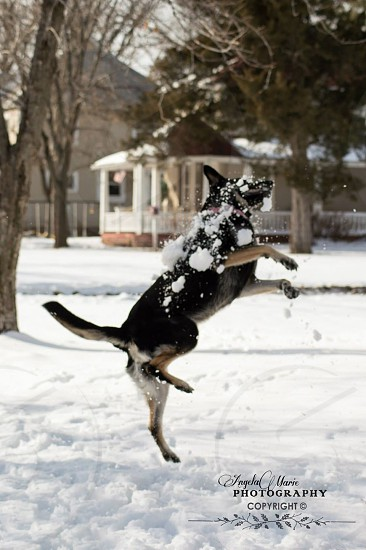 Snowball Catch photo