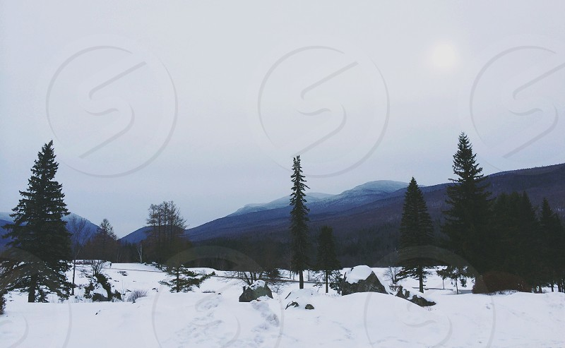 Pines mountains snow cold New Hampshire  photo