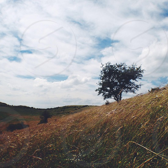 Hill wind wheat grass tree lonely isolated empty countryside landscape horizon sky clouds.  photo
