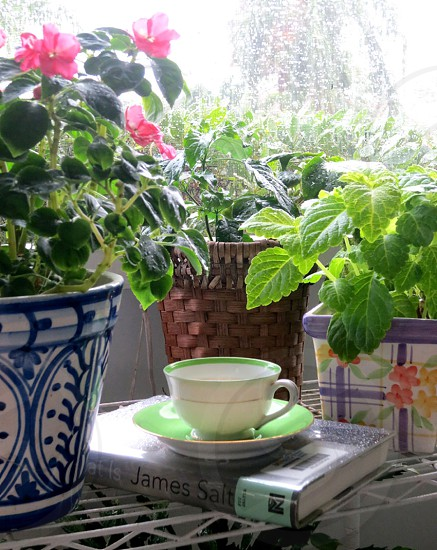Tea cup and book among potted flowers and foliage photo
